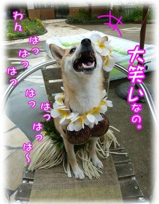 犬っちのブログ-大笑い