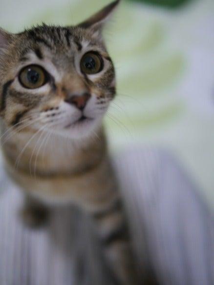 ayageha日記/猫と暮らす幸せ