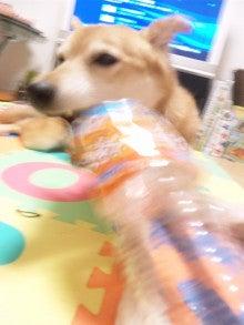 -雑種犬ココ&娘との生活--120811_004335.jpg