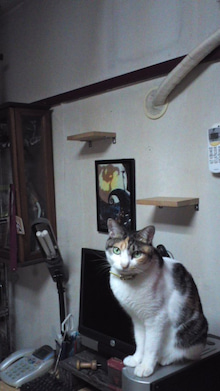 Motofumi☆YusaのHibi☆One☆Step-110626_2058~01.jpg