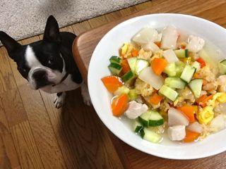 $犬の手作りごはんとおやつ レシピ nicocheBLOG-犬の手作りごはん おやつ レシピ 須崎 犬ごはん
