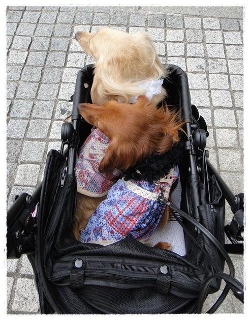 旅犬Lani&Leaのほほん風船記-T-SITE