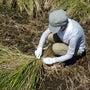稲刈り体験&友達作り…