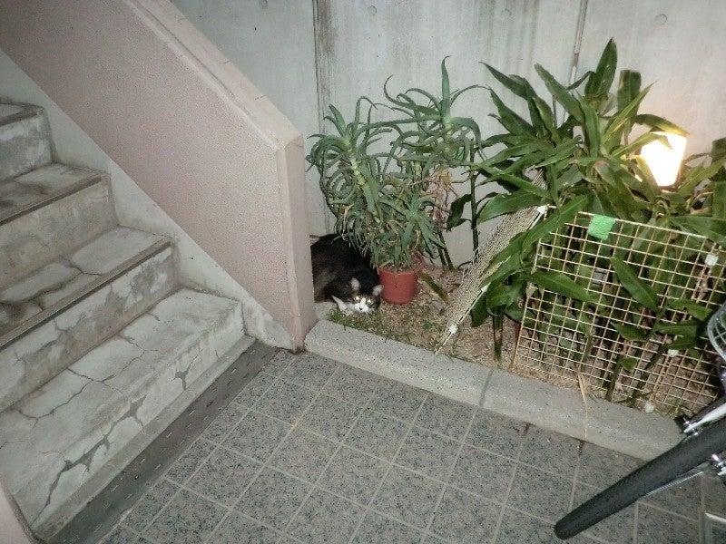 むぎママの家猫☆外猫パラダイス