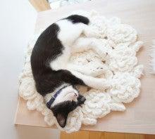 【大阪】猫カフェてんてん