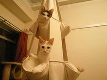 PFL★MIKIのブログ-2012081623230000.jpg