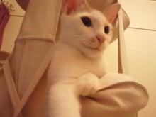 PFL★MIKIのブログ-2012081623350001.jpg