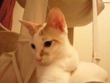 PFL★MIKIのブログ-2012081623350000.jpg