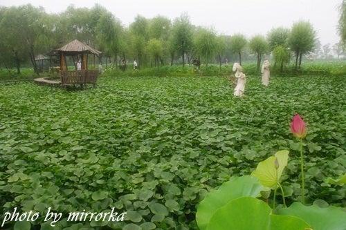 中国大連生活・観光旅行ニュース**-大連普蘭店千年古蓮園