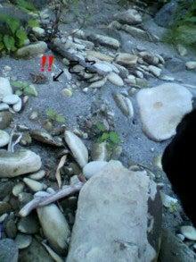 わたしとおっさんとワンコの暮らし☆-2012081915560004.jpg
