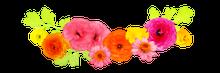 $埼玉県飯能市にある隠れ家エステサロン フローラルエッセンス-花