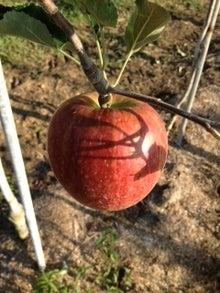 りんごの木の下で-つがる