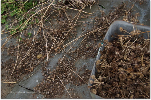 バラの庭・アトリエ・小さな雑貨【 wood-chips 】ウッドチップスのバックヤード-オルラヤ オルレアン グランディフローラーの種