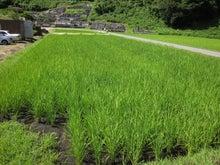 和仁農園|現場スタッフのつぶやき-全景です。