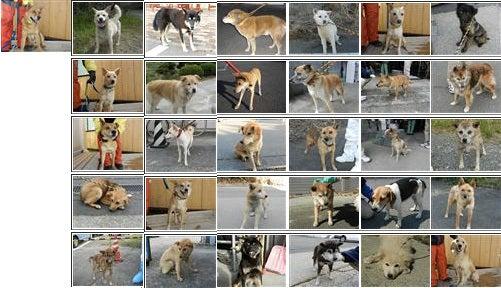 ビーガン&ベジタリアンショップ~SHOP MOJO MOJO-譲渡犬