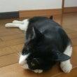 猫日記 その5