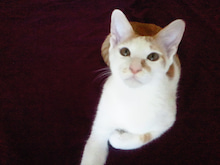 PFL★MIKIのブログ-2012082317070001.jpg