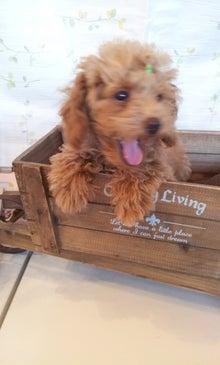 ブリーダーのお店JEWELS DOG スタッフブログ