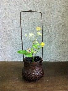 Blog 壷中日月長-20120820茶花