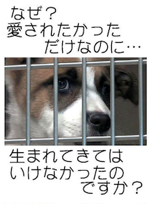 幸ママJUNが伝えたい事-attachment01.jpg