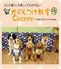 犬のしつけ教室Cocoro
