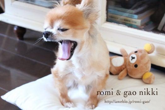 romi&gao nikki-9歳