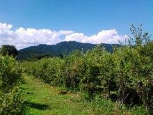 コミュニティ・ベーカリー                          風のすみかな日々-里山