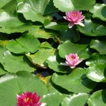 八郎沼で残暑を楽しむ…