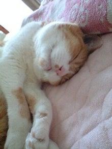 ずれずれブログ…湘南で猫と暮らせば…-120829_1301~0001.jpg