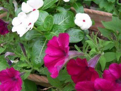 うさうさレシピ別館~Flower Land