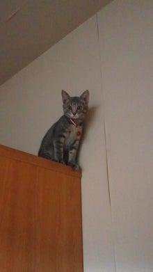 ふみちゃん観察日記~拾い猫だにゃ~