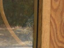 鴻巣の整体院ささき 整体よもやま話-子猫1