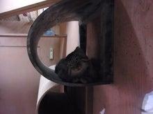 鴻巣の整体院ささき 整体よもやま話-子猫6