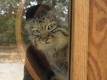 鴻巣の整体院ささき 整体よもやま話-子猫3