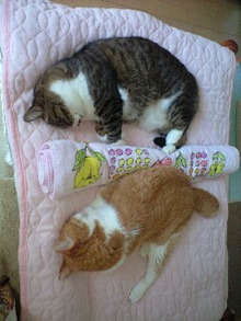 ずれずれブログ…湘南で猫と暮らせば…-120831_1520~0001.jpg