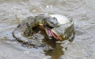 3分でわかる中国ビジネス攻略-ニシキヘビが魚を食う