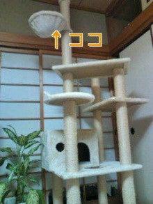麦ももの しまんと ニュース(日記?)-20120831212721.jpg