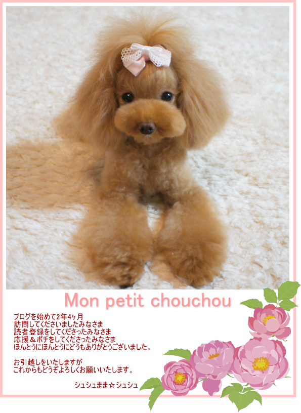 ☆Mon petit chouchou☆-ご挨拶状_1209