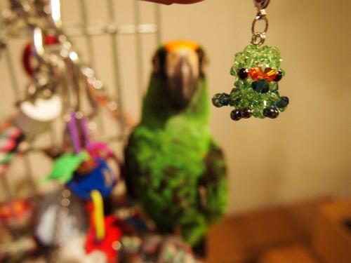 ズアカハネナガインコ カメ助のBLOG (オウム・鳥ブログ)