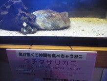 日本一周 友達づくり-15
