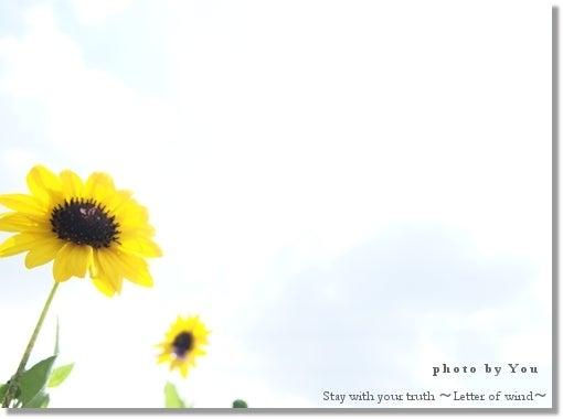 詩・画像詩ブログ【そのままで ~風の便り~】-いつか今日を思い出すとき