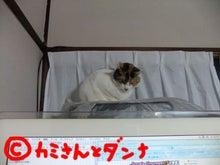 $カミさんとダンナの猫ブログ-ちまっとな