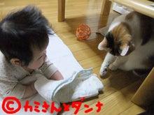 $カミさんとダンナの猫ブログ-仲良しかな?