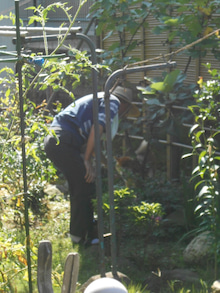 $Shi-Ba 【シーバ】編集部のブログ-朝の庭で