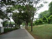 $正賀流のブログ-シンガポール森