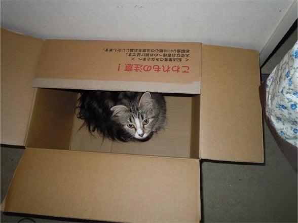 Nor-Chilla Kittens-0906M