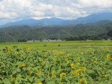 $とやま定住コンシェルジュ 3代目のブログ-立山町「越中陶の里・陶農館」のとなりの畑