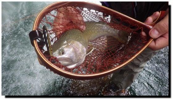 渓流釣り ルアー フィッシング Master 本山博之の 渓流情報