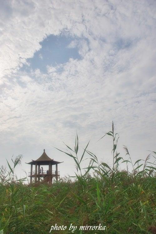 中国大連生活・観光旅行ニュース**-盤錦・鼎翔鳥楽園 葦海現鶴(蘆園)
