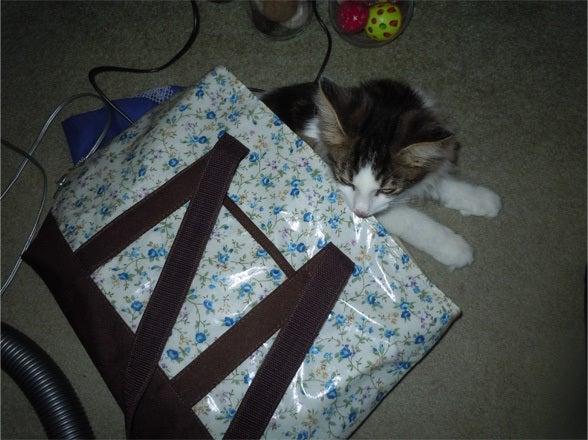 Nor-Chilla Kittens-0907か